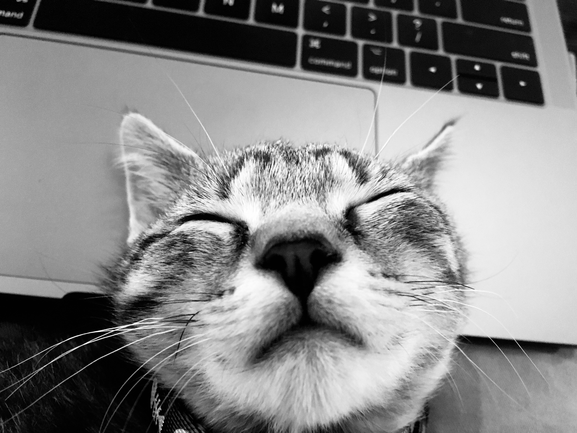 Sleeping Cat on a computer keyboard