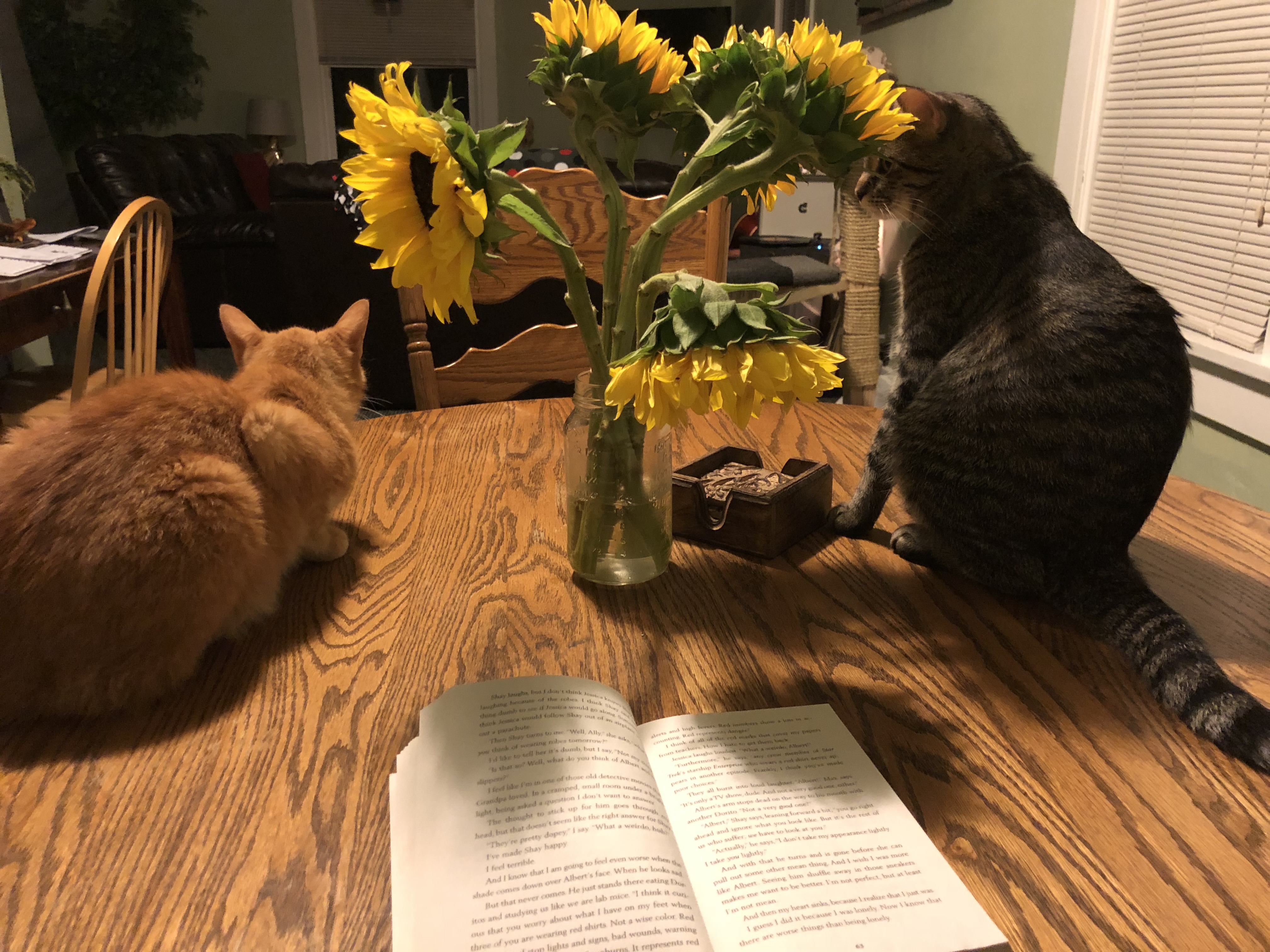 photo of 2 cat laying on a table with flowers in the background with
