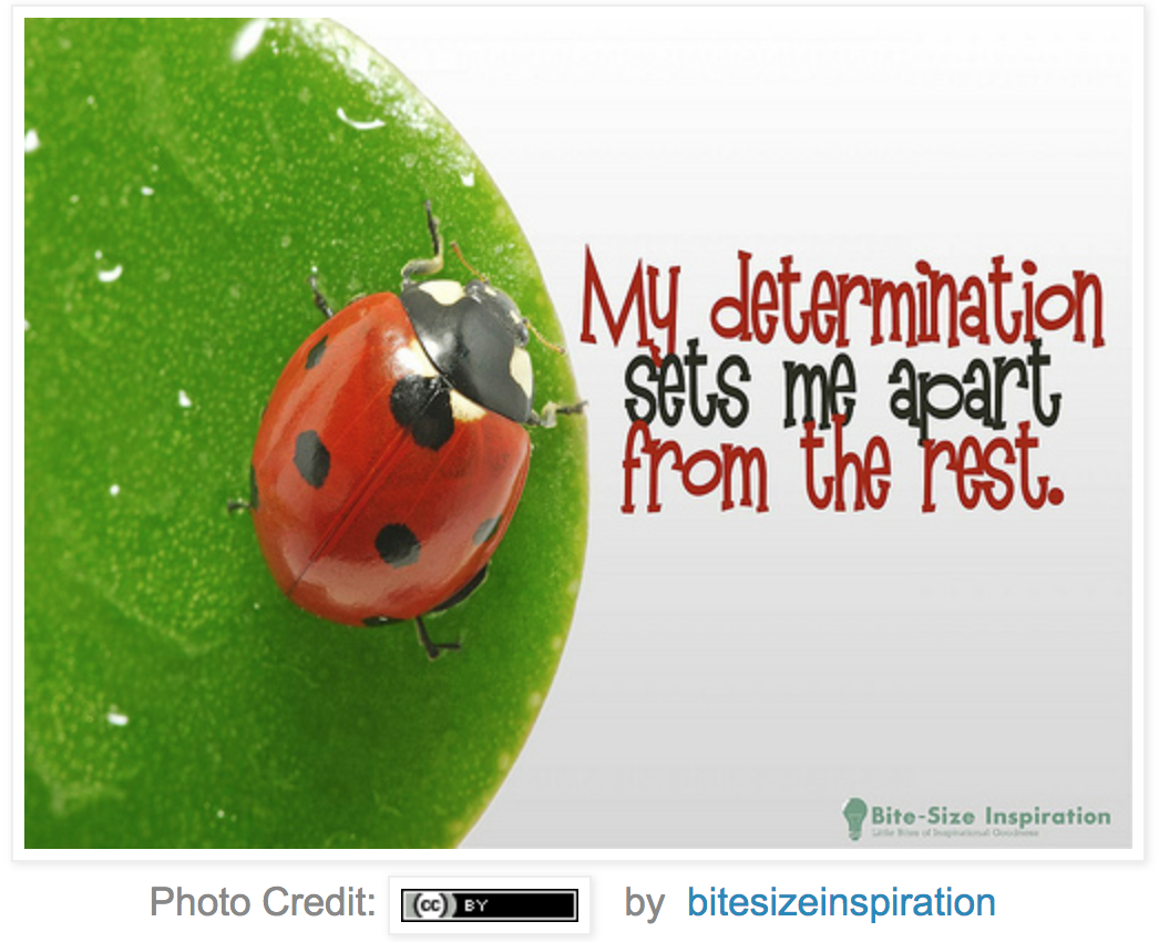 Lady Bug on a leaf with the quote,
